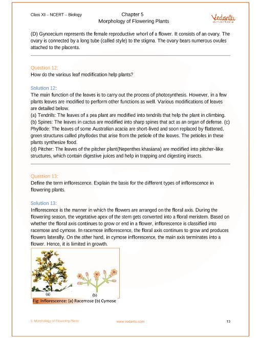 Morphology Of Flowering Plants Cl 11 Ncert Solutions Pdf - Flowers
