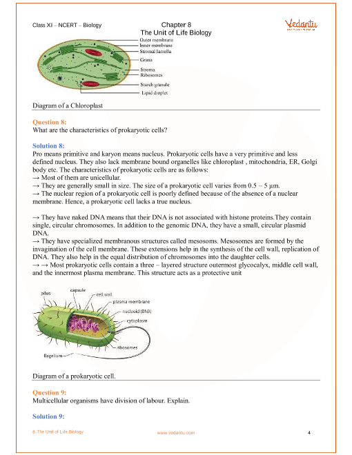NCERT Solutions for Class 11 Biology Chapter 8 Cell The Unit