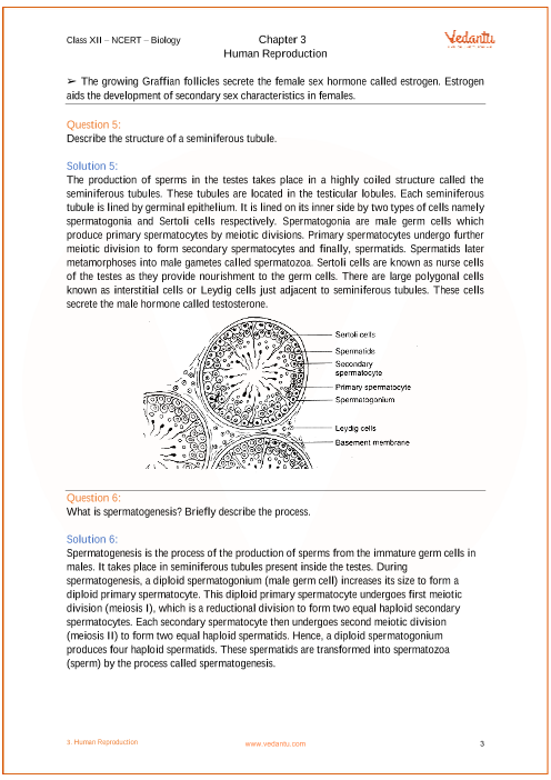 NCERT Solutions for Class 12 Biology Chapter 3 Human