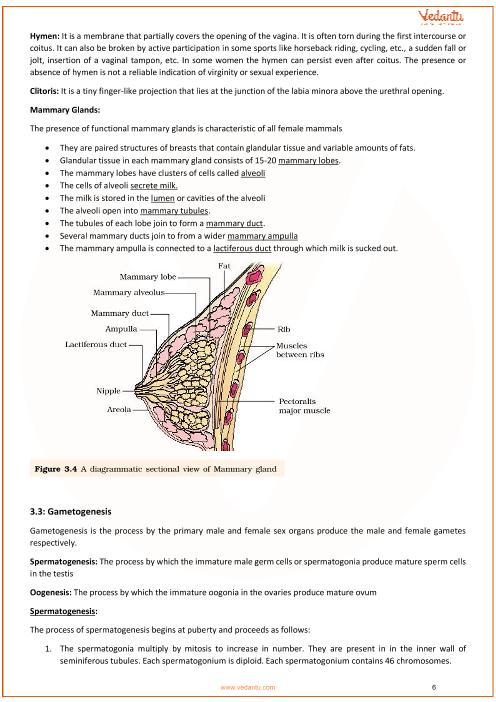 CBSE Class 12 Biology Chapter 3 - Human Reproduction