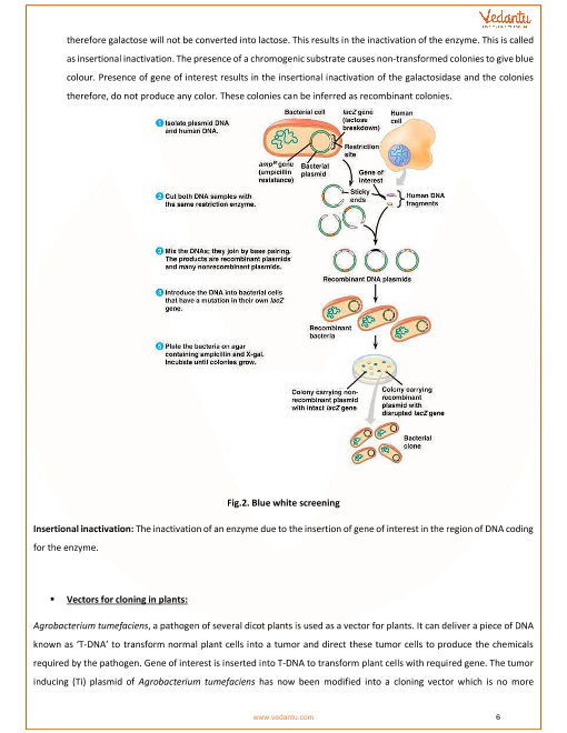 CBSE Class 12 Biology Chapter 11 - Biotechnology: Principles and