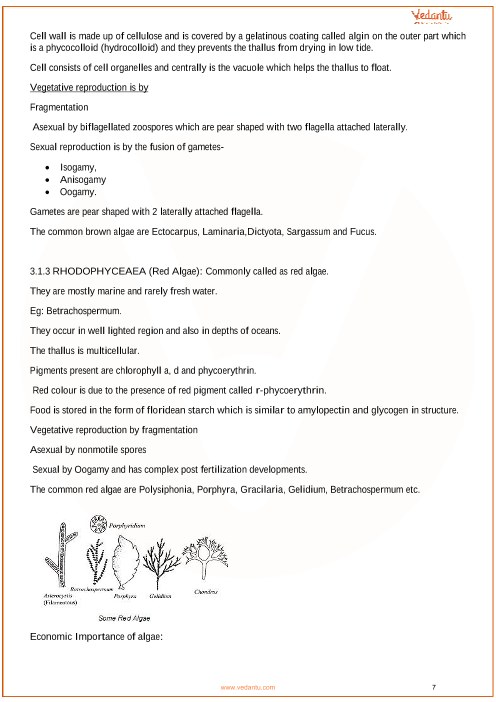 CBSE Class 11 Biology Chapter 3 - Plant Kingdom Revision Notes