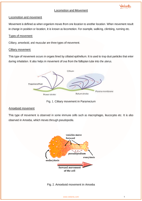 CBSE Class 11 Biology Chapter 20 - Locomotion and Movement Revision
