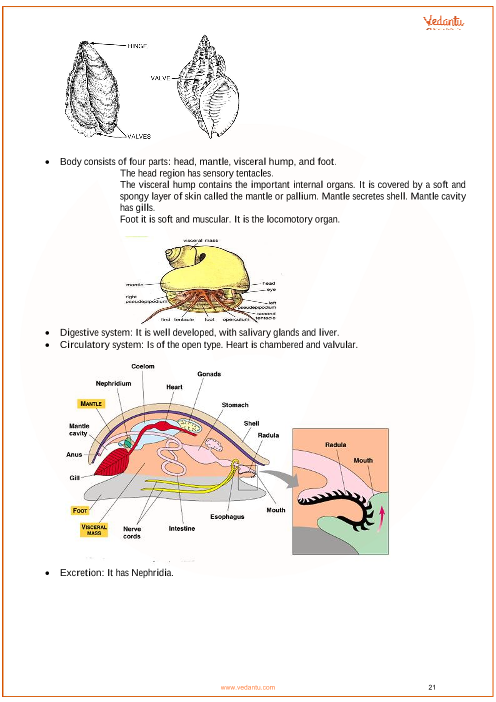 CBSE Class 11 Biology Chapter 4 - Animal Kingdom Revision Notes