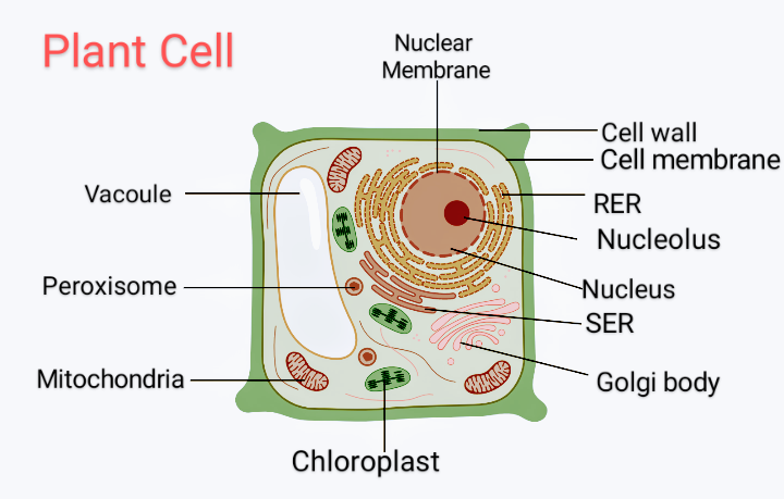 Draw a diagram of a plant cell and label at least eight ...