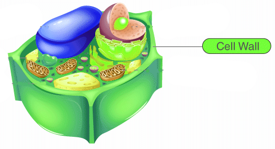 Nonliving part of the plant cell is a Nucleus b Cytoplasm ...