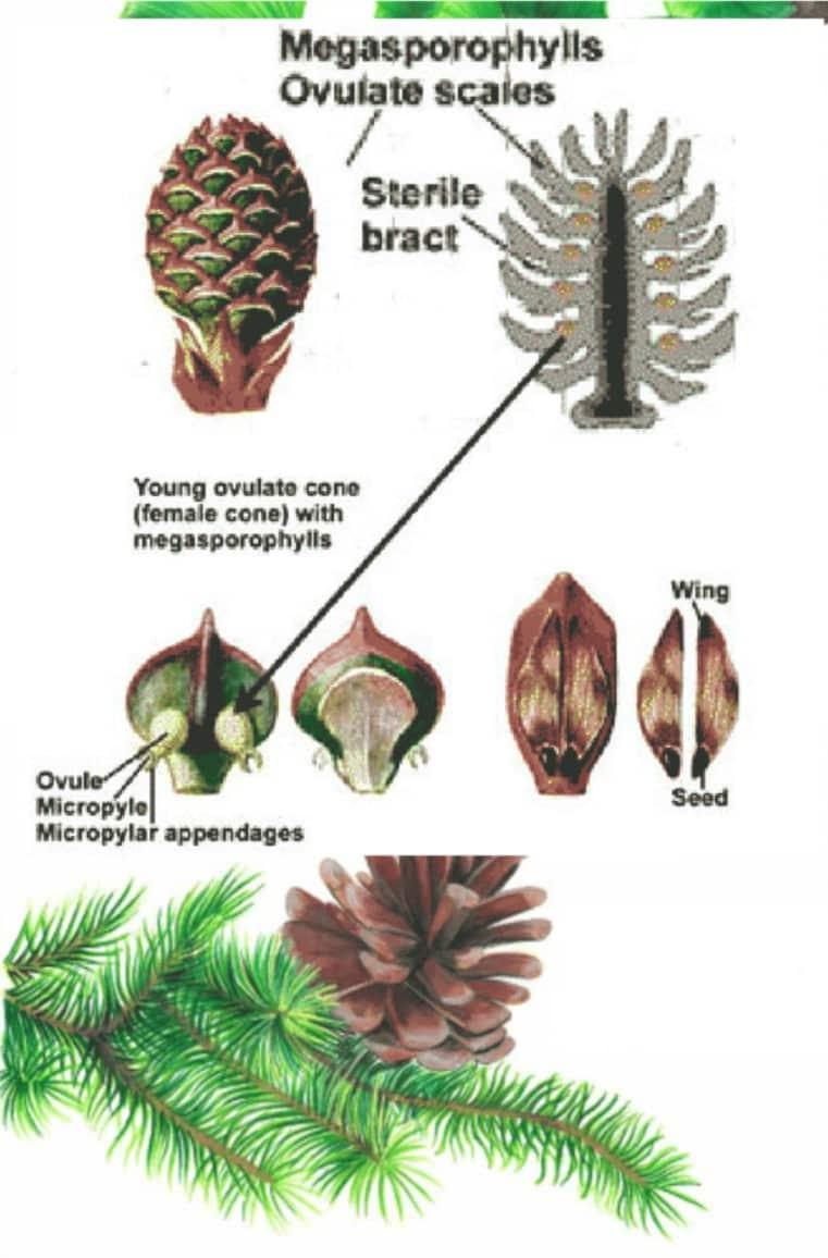 Plant Kingdom | Plantae Kingdom Classification and