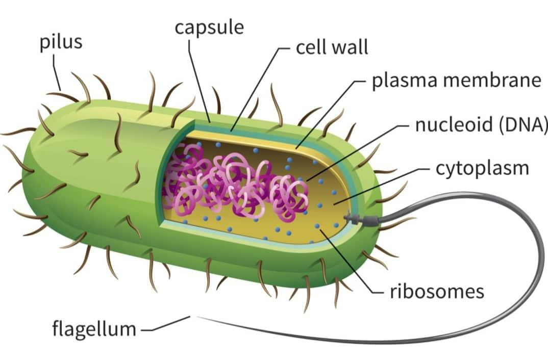 Cell Structure and Function | Types of Cells - Prokaryotic ...