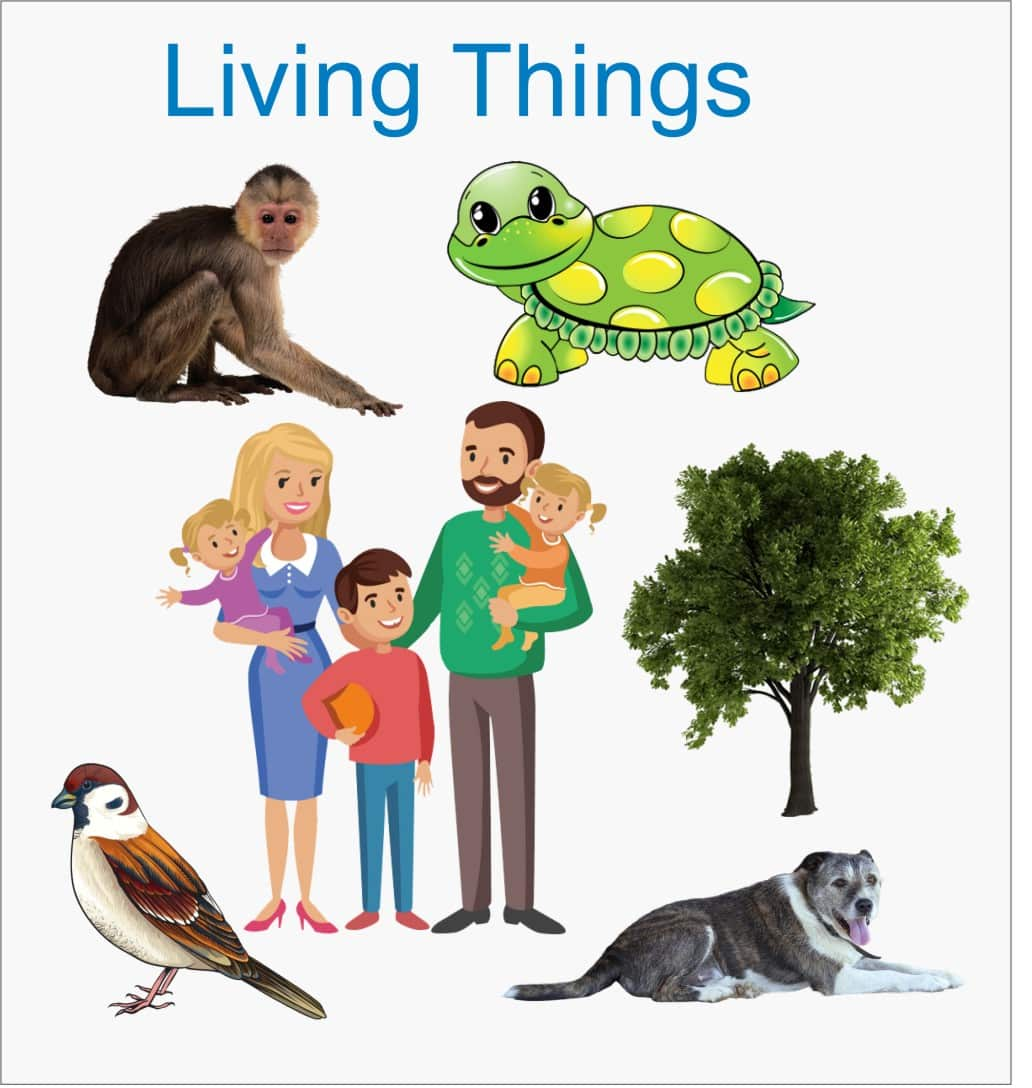 Living Things | Characteristics and Classification of Living